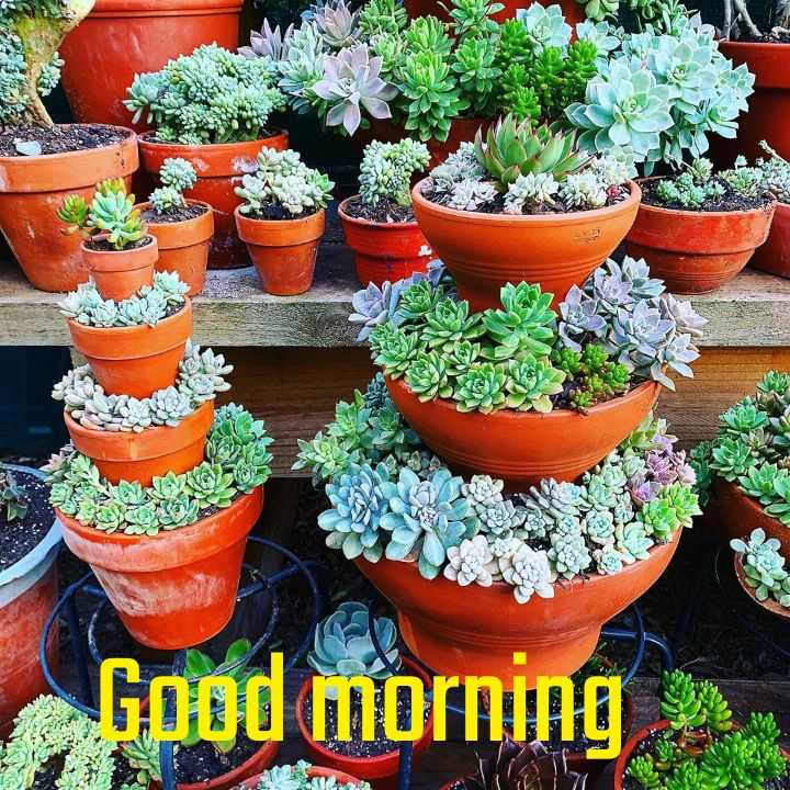 flower photography - T \ * A a Good morning IN - ShareChat