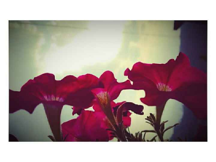 flower photography - ShareChat