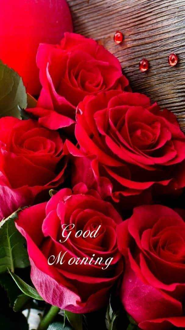 🌹 flower photography - Good Morning - ShareChat