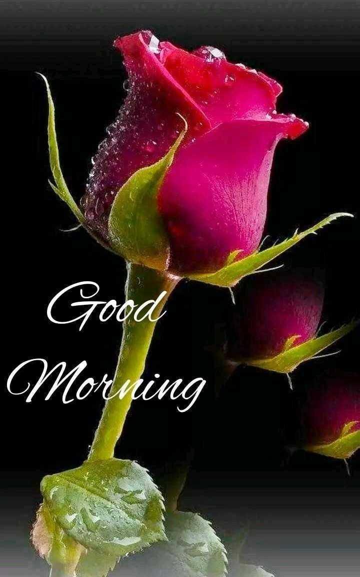 flower photography - Gooa Morning - ShareChat