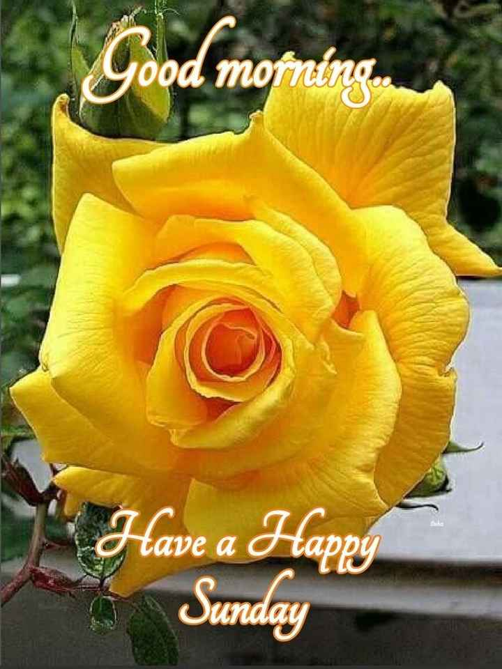 flower photography - Good morning . Have a Happy Sunday - ShareChat