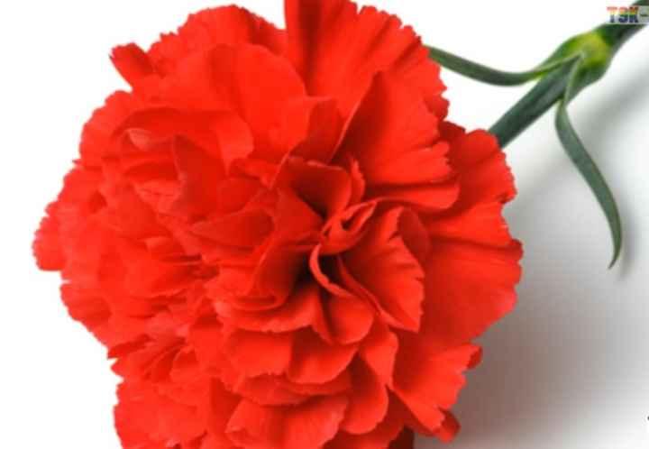 flower pik - TSK - ShareChat