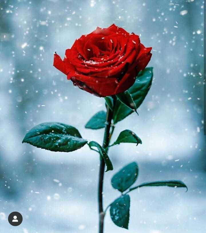 flower pik - ShareChat