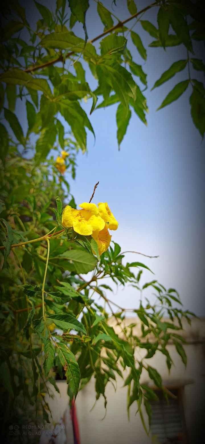 flowers - REDMI NOTE 3 PRO AI QUAD AMERA Q - ShareChat