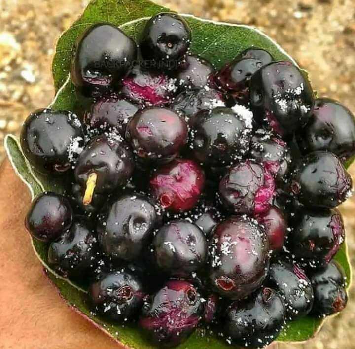 fruits - ShareChat