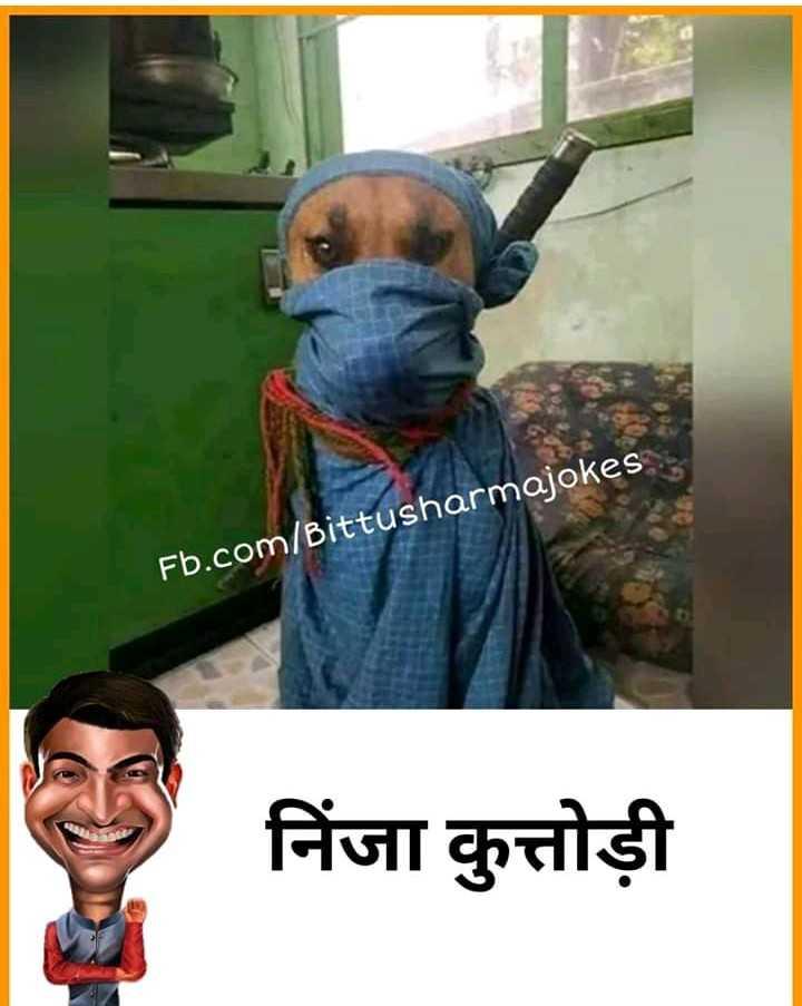 funny dog - Fb . com / Bittusharmajokes निंजा कुत्तोड़ी - ShareChat