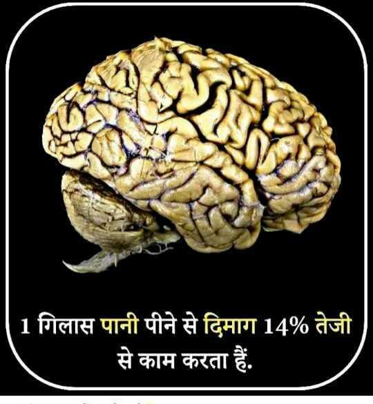 g.k. trick - 1 गिलास पानी पीने से दिमाग 14 % तेजी से काम करता हैं . - ShareChat