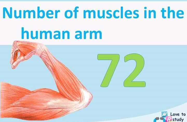 g.k. trick - Number of muscles in the human arm 72 M Love to B study - ShareChat