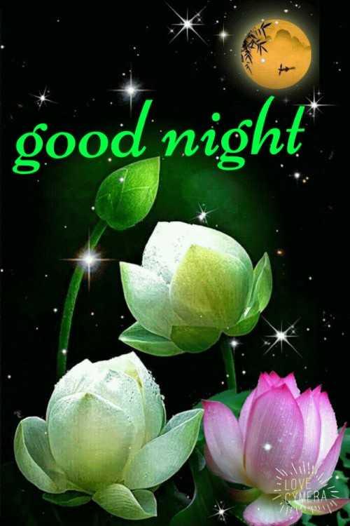 g0od m0rn!ng.. - good night ERAS - ShareChat