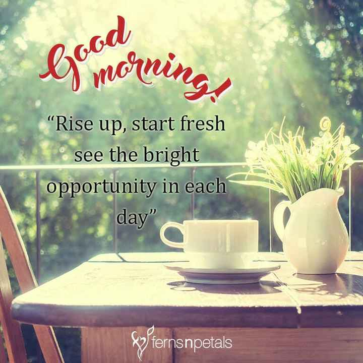 """g0od m0rn!ng.. - Barriorning , od """" Rise up , start fresh see the bright opportunity in each day Sy fernsnpetals - ShareChat"""