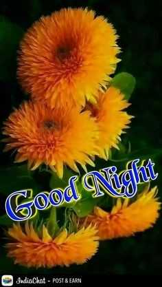 gn 😊 - Good Night IndiaChat - POST & EARN - ShareChat