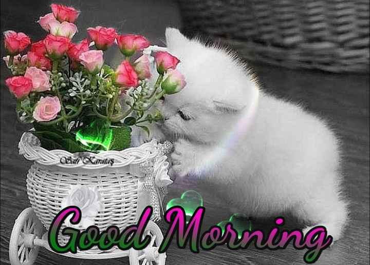good ℳᝪℛℕⅈℕℊ - Adidalaş Good Morning - ShareChat