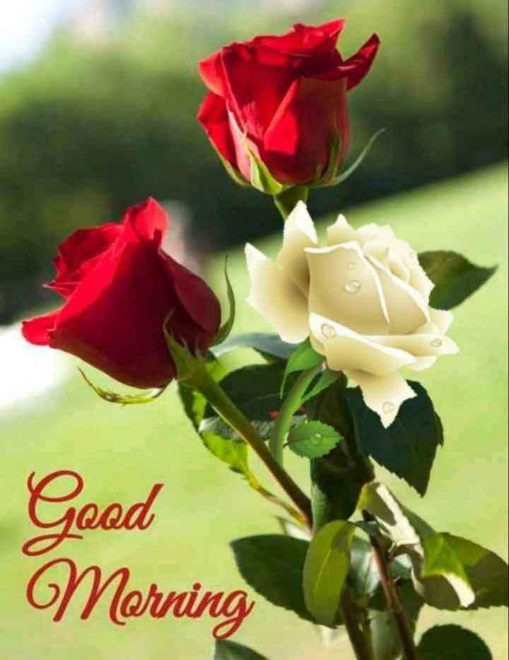 good ℳᝪℛℕⅈℕℊ - Good Morning - ShareChat