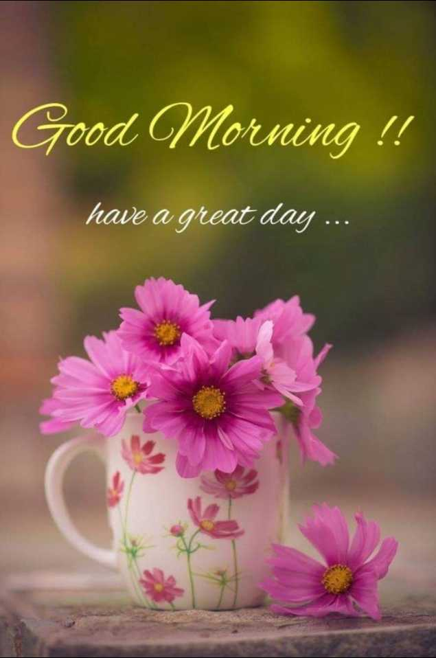 good ℳᝪℛℕⅈℕℊ - Good Morning ! ! have a great day . . . - ShareChat