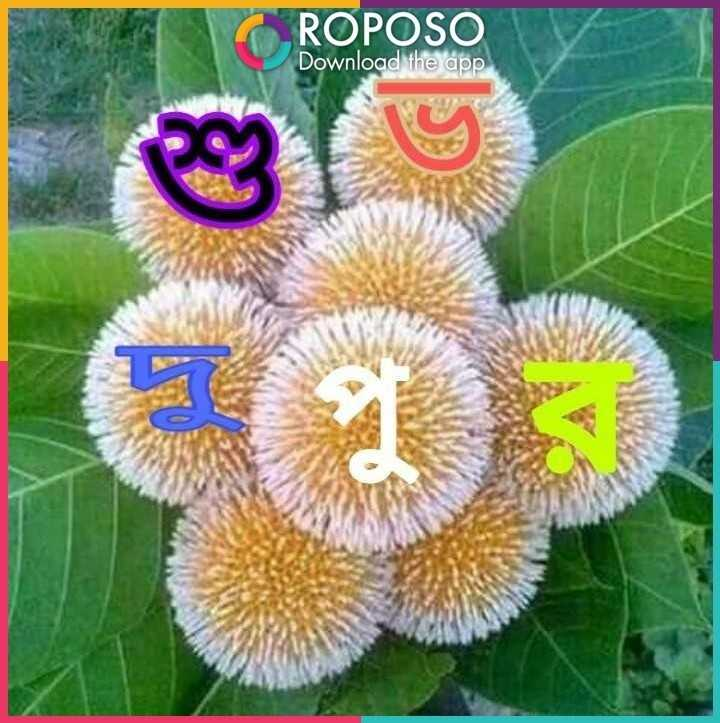 good afternoon...💐 - ROPOSO Download the app - ShareChat