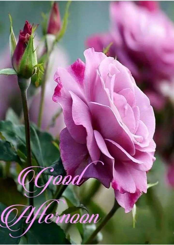 💮💮good afternoon 💮💮 - Aftemoan - ShareChat