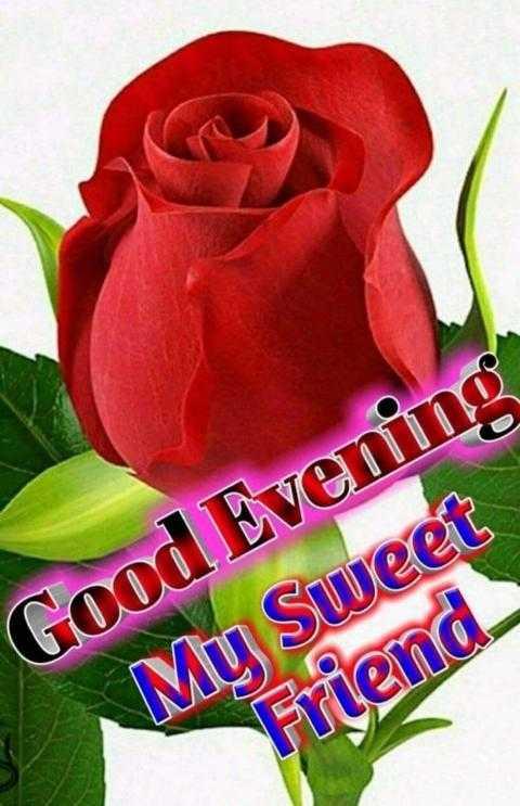 good evenging - Good Evening My Sweet Friend - ShareChat
