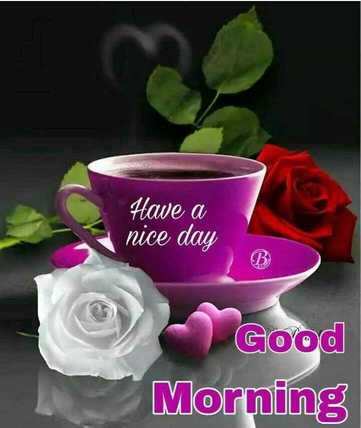 ☕good evening ☕ - Have a nice day Good Morning - ShareChat