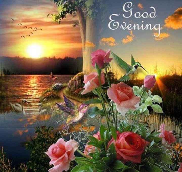 goodevening - Good Evening - ShareChat