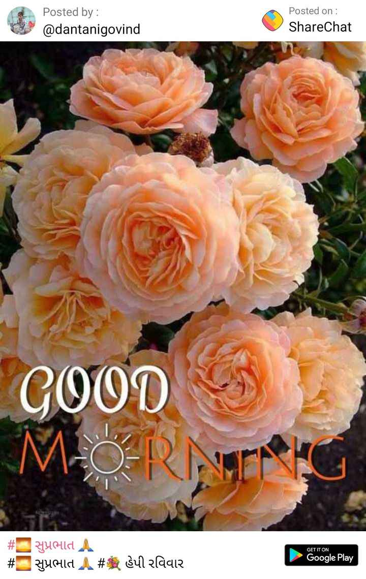 good mornig - Posted by : @ dantanigovind Posted on : ShareChat GOOD M - O - RNG GET IT ON # # Yuld A yold A # gullaaie Google Play - ShareChat