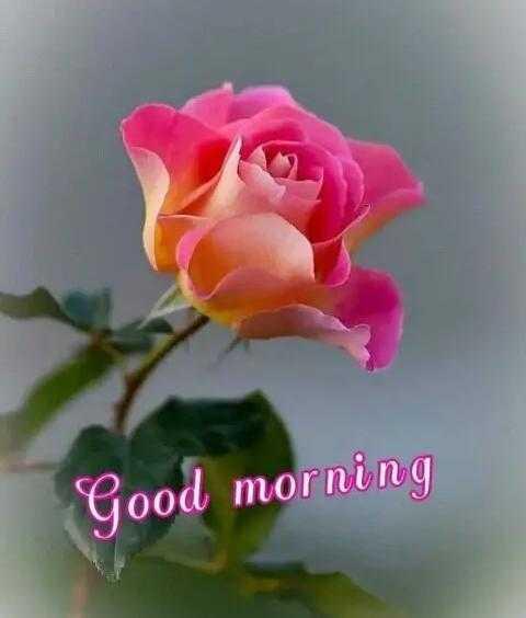 good morning#सुप्रभात - Good morning - ShareChat