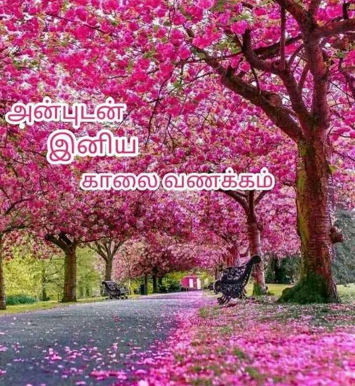 good morning 🙋🏻♀️ - அன்புடன் இனிய . காலை வணக்கம் - ShareChat