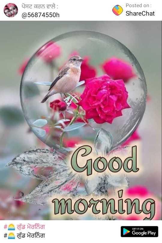 good morning ......... - ਪੋਸਟ ਕਰਨ ਵਾਲੇ : @ 56874550h Posted on : ShareChat Good morning # # dis Hafodt dia Halad GET IT ON Google Play - ShareChat