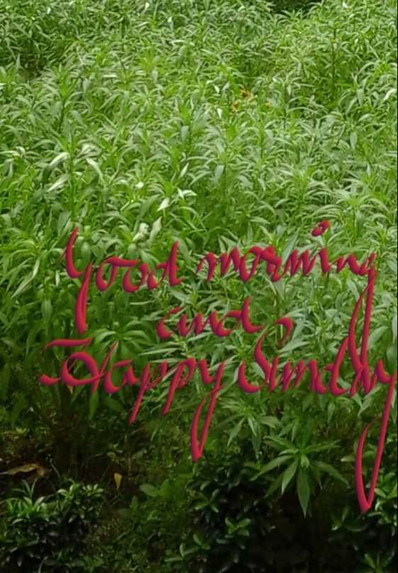 good morning ......... - ShareChat