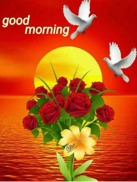 good morning.... - good morning - ShareChat