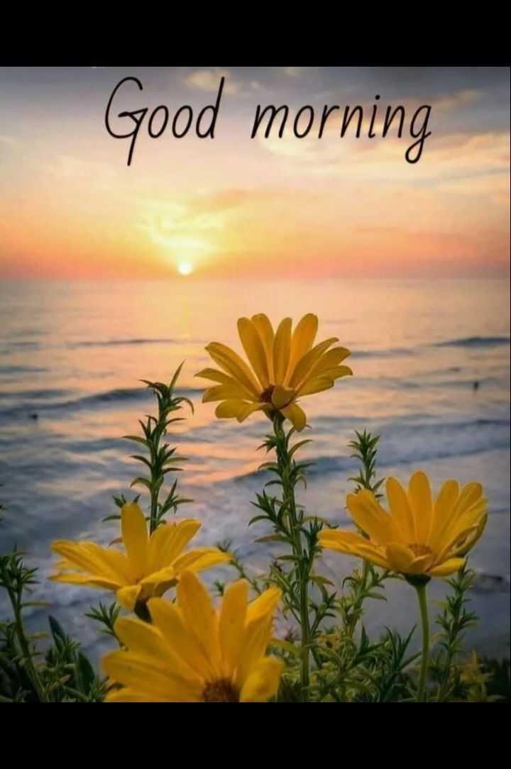 🙋good morning...🌹🌹🌹 - Good morning - ShareChat
