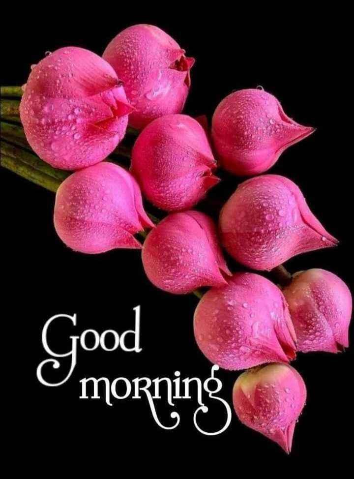 🙋good morning...🌹🌹🌹 - Good O morning - ShareChat