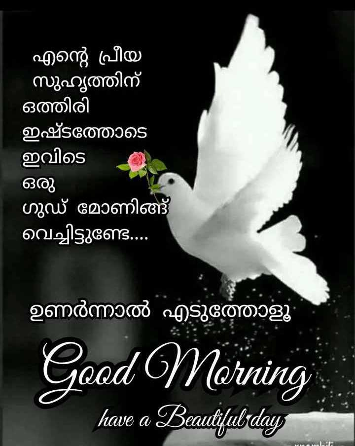 🙋good morning...🌹🌹🌹 - എന്റെ പ്രീയ സുഹൃത്തിന് ഒത്തിരി ഇഷ്ടത്തോടെ ഇവിടെ ഒരു ഗുഡ് മോണിങ്ങ് വെച്ചിട്ടുണ്ട് . . . . ഉണർന്നാൽ എടുത്തോളൂ Good Morning have a Beautifulsday - ShareChat