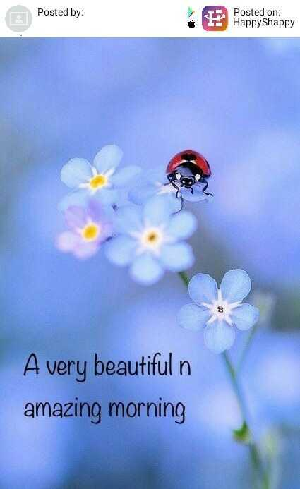 goodmorning - Posted by : Posted by : Posted on : HappyShappy A very beautiful n amazing morning - ShareChat
