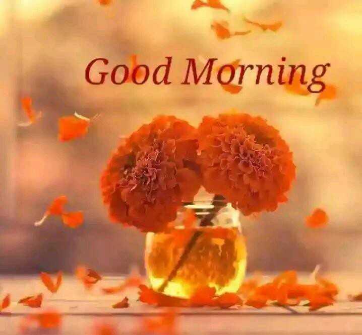 🌹🌷good morning🌷🌹 - Good Morning - ShareChat