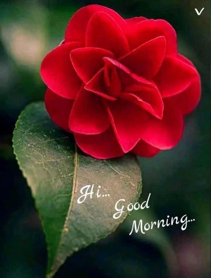 🌹☕good morning 😄 - Hi . . . Good Morning . . - ShareChat