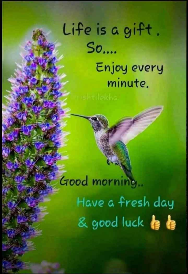 🍁🍃🌺good morning🌺🍃🍁 - Life is a gift , So . . . . Enjoy every minute . Prishtilekha Good morning . Have a fresh day & good luck bb - ShareChat
