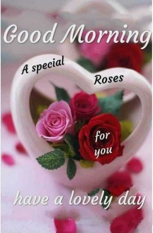 good morning - Good Morning A special Roses for you have a lovely day - ShareChat