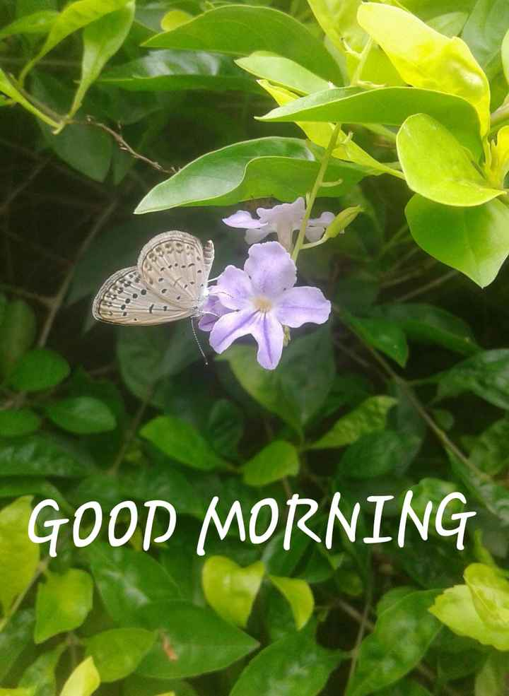 🌸💐🌸 good morning🌸💐🌸 - GOOD MORNING - ShareChat