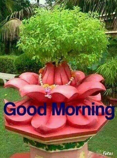 ##good morning# - Good Morning . Fotos - ShareChat