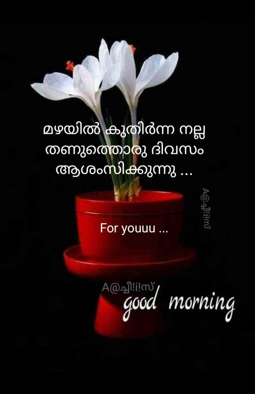 💖good morning💖 - മഴയിൽ കുതിർന്ന നല്ല തണുത്തൊരു ദിവസം ആശംസിക്കുന്നു . . . A @ ച്ചീ ! ! ! സ് For youuu . . . A @ ച്ചീ ! ! ! സ് good morning - ShareChat