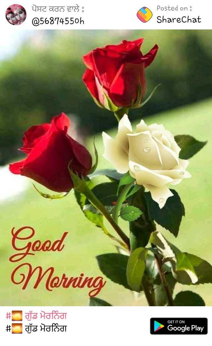 🌷🌻🌷🌻good morning - ਪੋਸਟ ਕਰਨ ਵਾਲੇ @ 5687455oh Posted on : ShareChat Good Morning # # ਗੁੱਡ ਮੋਰਨਿੰਗ ਗੁੱਡ ਮੋਰਨਿੰਗ GET IT ON Google Play - ShareChat