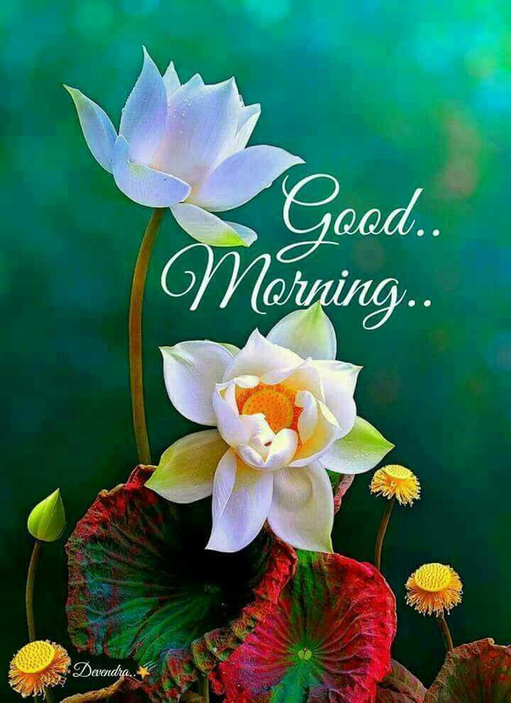 good morning 🌞🌞🌄 - Good . . Norning . Dandra - ShareChat
