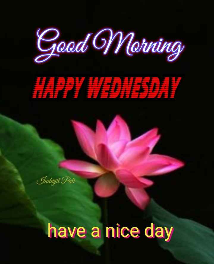 💐🌻good morning🌻💐 - Good Morning HAPPY WEDNESDAY Inderjit Pali have a nice day - ShareChat