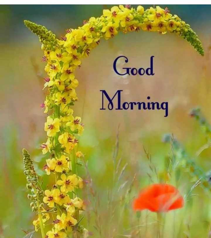 good morning 🌞🌞🌄 - Good Morning - ShareChat
