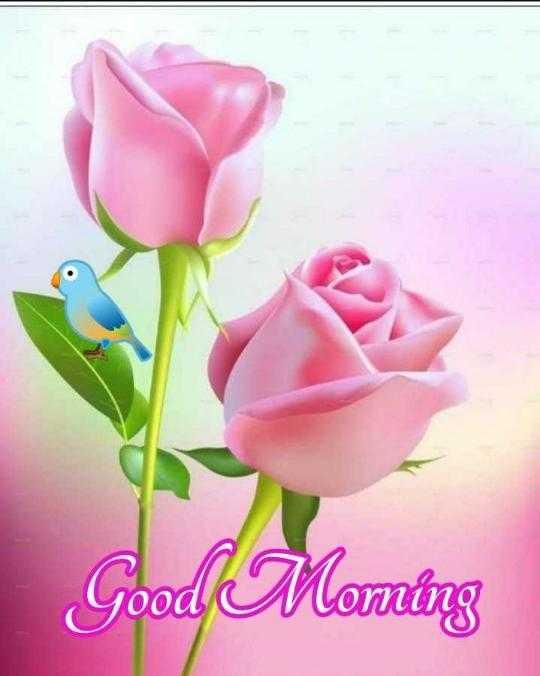 good morning 💖💞 - Good Moming - ShareChat