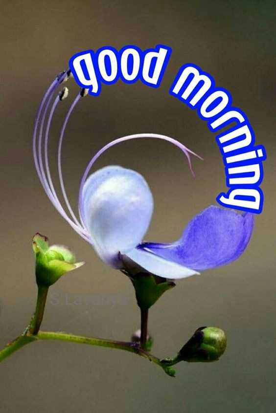 good morning - good mornino - ShareChat