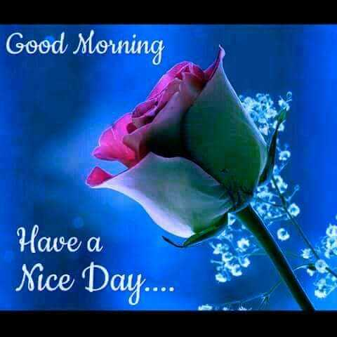 good morning - Good Morning Have a Nice Day . . . . - ShareChat