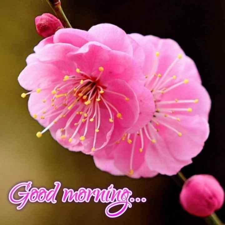 good morning 🌷 - Good morning . - ShareChat