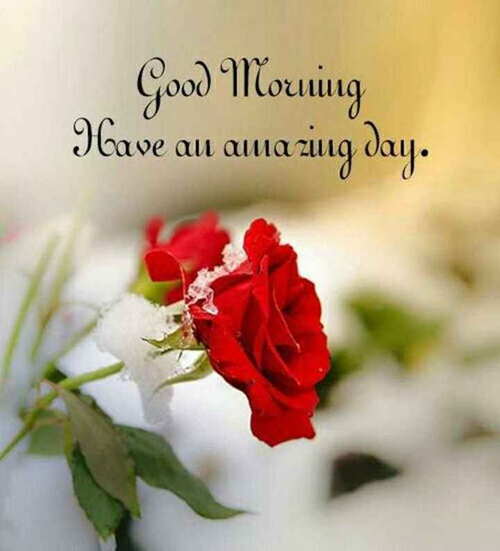 good morning - Good Morning Have an amazing day . - ShareChat