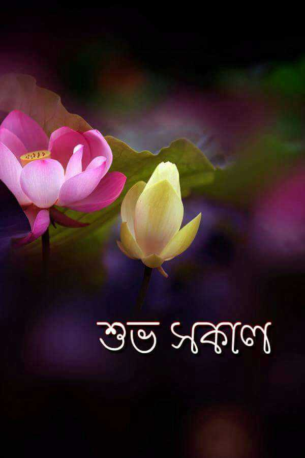 good morning ☀☀☀ - : : } } } শুভ সকাল - ShareChat